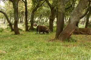 Sardinienreisen durch den Nationalpark des Hochplateaus der Giara di Gesturi